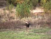 Охота на оленя. Охота в Вологодской области
