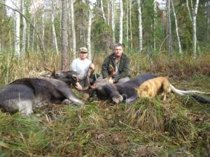 Клавдино. Охота на лося